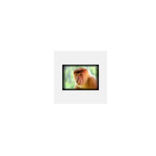 お猿さんの写真をプリントしたオリジナルステッカー