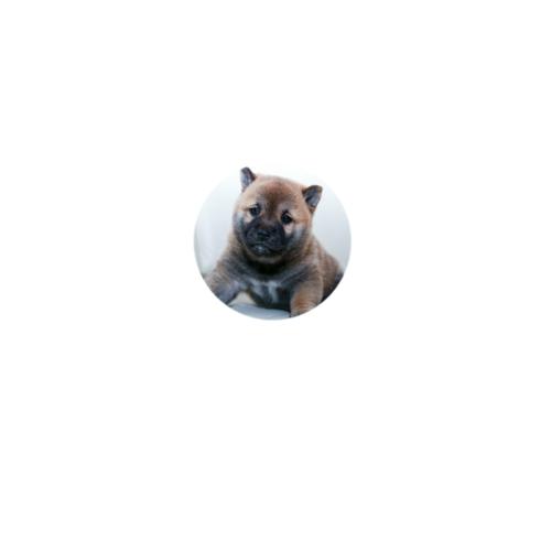 愛犬の写真をプリントしたオリジナル缶バッジ