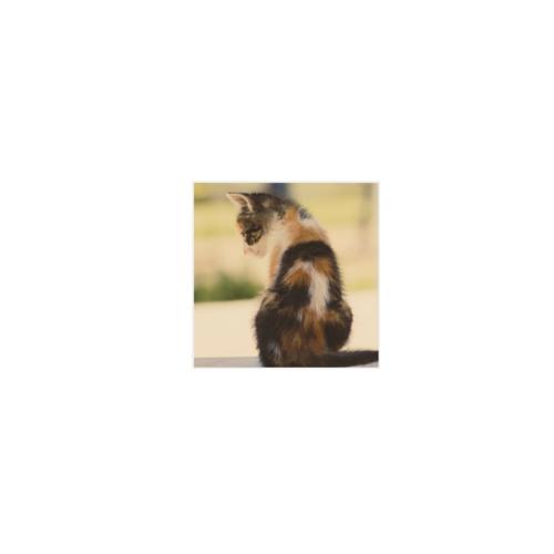 愛猫写真のオリジナルステッカー